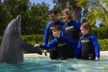 actividades en Miami: nadar con delfines