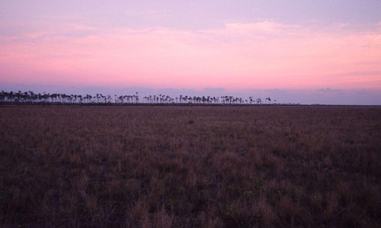 Everglades3-1600x960
