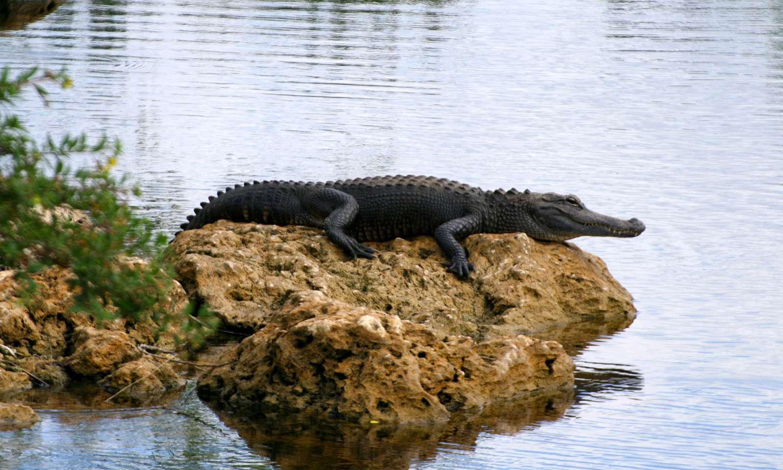 Everglades4-1600x960
