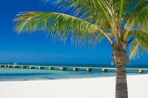 excursi-n-para-navegar-y-bucear-en-key-west-desde-miami-in-miami-43733